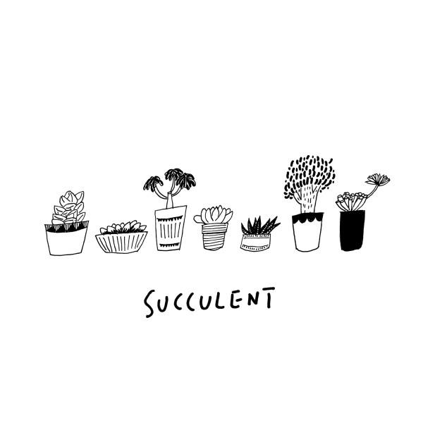 succulent_illust